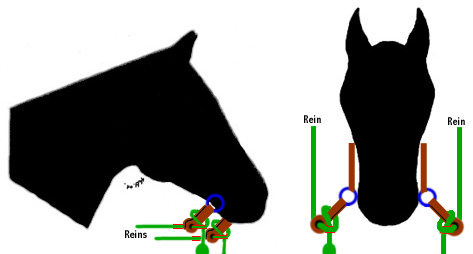Tying Reins or Mecate Bit