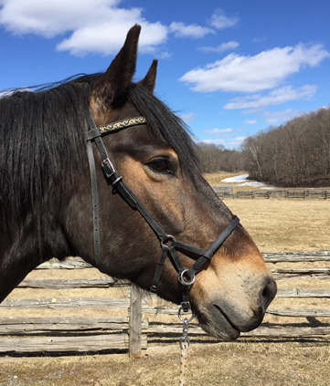 Deluxe Side-Pull Bitless Bridle/Halter